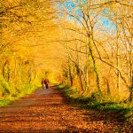 Autumn pathway alley Co. Cork, Ireland. Park road landscape with the autumnal forest. Orange trees leaves. People walking.